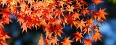 アロマで愉しむプラネタリウム~紅葉の香り~